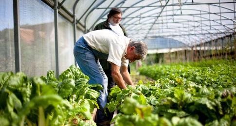 jardiner au naturel potager bio et compost mouvement colibris. Black Bedroom Furniture Sets. Home Design Ideas