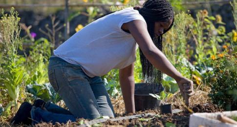 Faire son jardin potager agro cologique mouvement colibris for Candide cultiver son jardin