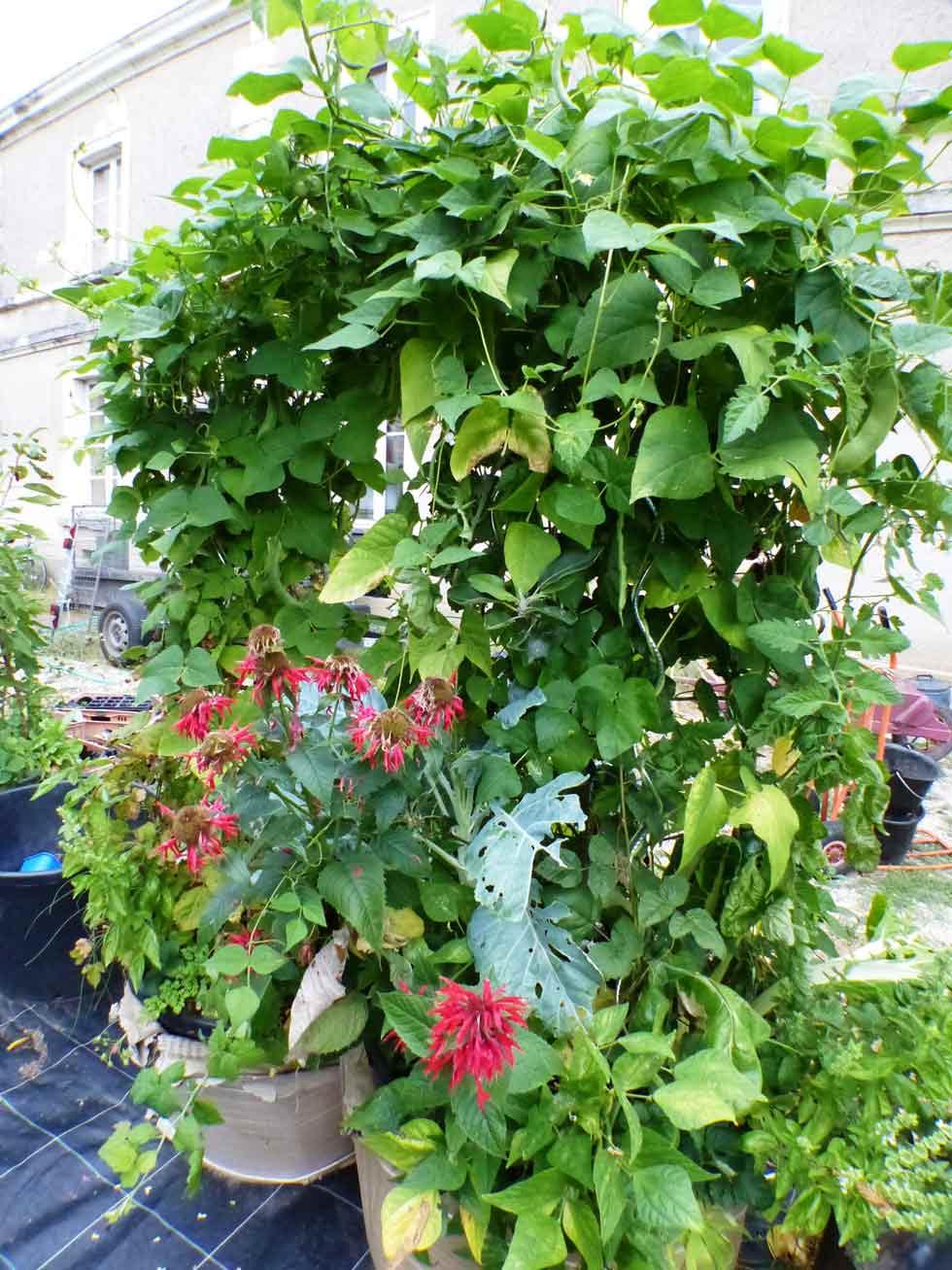 quand les plantes s 39 assemblent mouvement colibris. Black Bedroom Furniture Sets. Home Design Ideas